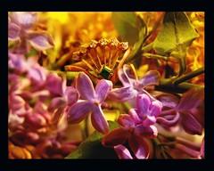 In the world of flowers.... (makunia) Tags: bravo searchthebest splendiferous magicdonkey xxxxxxxx outstandingshots goodmorningkisses artlibre superaplus superbmasterpiece goldenphotographer bratanesque loveyouxxxx bungoballa lofabungoballa psychadeliccabbage wkemagicalgardenaward goldennutaward keepsmilingkeepshininglovelywomblem seriouscroutonproblem moreinfoinwkeglobelater youareabeautifulwomble waitingformorewomblemagic rotflolololol lolnowthatsonesexyspiderwithspeedoslol lollollolyouhavetolistentothemusiconthespiderlol aplusphhoto