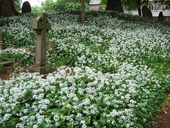 Penwortham churchyard