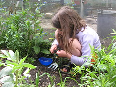 sowing 'round' carrots