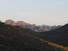 Mountain Cactus (LilBtch) Tags: cactus mountain az saguaros lakepleasant arizonawonders flickrmembers