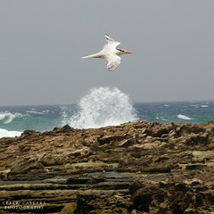 Freedom (Cesar R.) Tags: sea bird beach d50 landscape mar nikon puertorico seagull wave playa nikond50 explore shore ave 60mm splash nikkor gaviota ola naturesfinest hatillo avianexcellence