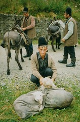 Transylvanian shepherds (mm-j) Tags: mountain film sheep shepherd traditional donkey 1999 scan contax romania lamb t2 retezat transhumance scanfromprint pastoralism