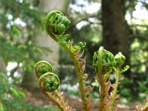 Unfurled Ferns