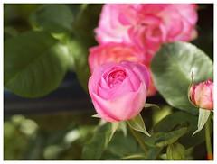 Rose 070520 #06