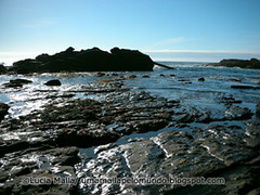 ©Point Lobos 8
