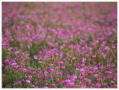 Flowers 070523 #06