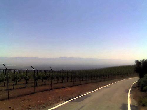 A vineyard at Montebello