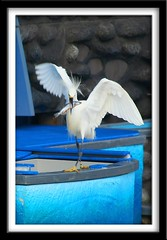 Stop that thief! (Got Picz?) Tags: california fish bird tag3 taggedout tag2 tag1 thief seaworld