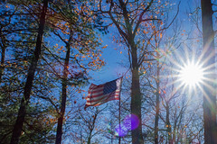 American Flag In Forest (DoMoreB) Tags: forest flag american usa symbols spotted trees sun nature sky colors blue red canon g7x