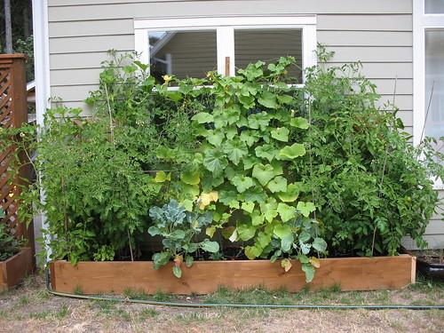 garden - july 2008