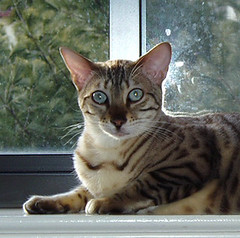 Pasha in the window