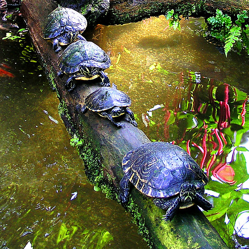 ZOO ANIMALS AND PETS: pet turtles