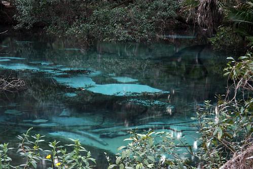 fern hammock springs ocala national forest marion county florida 8 flickriver  photoset  u0027springs florida u0027 by alan cressler  rh   flickriver