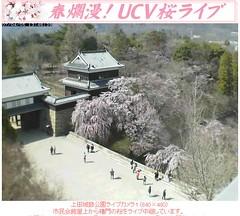 櫻花七分開! 20070405上田城跡公園