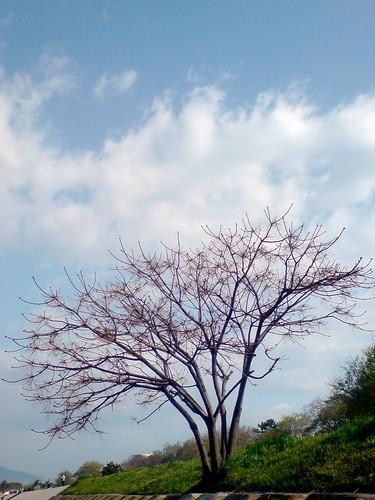 treemark