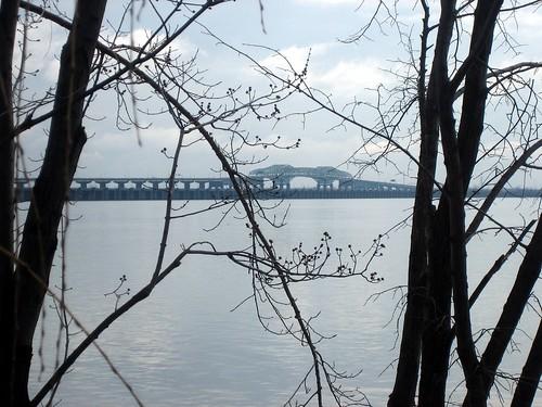 bridge and buds