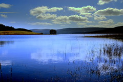 Day dreaming (Nicolas Valentin) Tags: blue reflection tree water scotland scenery neat ecosse lochcarron wowiekazowie