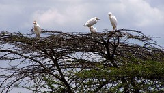 Birds on top of a tree