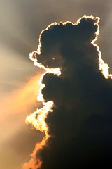 a cloud like my dog!   (Available for Licensing at GETTY Images) (! .  Angela Lobefaro . !) Tags: cloud dog sun rabbit topf25 girl beautiful silhouette angel clouds interestingness topv555 nuvola teddy quality gorgeous topv444 himmel bleu ciel cachorro teddybear getty 400views 300views bichon bichonfrise 500views nuage nuages frontpage ubuntu perrito 600views coucherdesoleil gettyimages italians bunnie 2007 topv200 bolognese hachiko coniglio interestingness2 cagnolino topv500  kubuntu coniglietto blueribbonwinner topf30 orsetto topv600 topv300 dogsallowed topv400 hachik chineseshadows someonelovesthisshot 2550faves i500 ombrecinesi bestphotosonflickr 25faves volken bestpicturesonflickr aplusphoto hokhiko holidaysvacanzeurlaub angiereal 1outof1000 theunforgettablepictures 1outof500 angelalobefaro angelamlobefaro