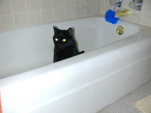 Takin' a Bath, Mr. Grr?