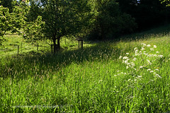 the meadow iv. (*Sabine*) Tags: green germany landscape deutschland scenery europa europe meadow wiese landschaft bergischesland solingen weinsbergtal year:uploaded=2007 sabinesteinmller