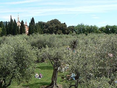 l'oliveraie.jpg