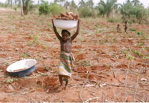 Enfant et manioc 031112