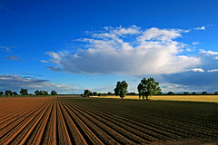 Field of dreams (ue06) Tags: blue trees sky field silhouette clouds woodland alley farm quality conservation sunny heartland valley crop watershed land sacramento agriculture davis solano soe agricultural yolocounty centralvalley cachecreek putahcreek yolo instantfave specnature sfchronicle96hrs abigfave anawesomeshot superbmasterpiece