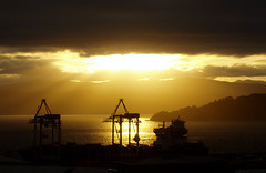 Golden dawn over Wellington Harbour