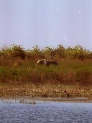 1998 ZAZimBotsw 7-007 (Code Redsniper) Tags: africa old house lake fish elephant game drive boat ruins meer jeep eagle wildlife south houseboat victoria falls safari zimbabwe botswana chobe kariba zambezi