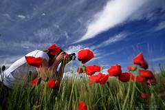 Poppy session (LucaPicciau) Tags: sardegna ca primavera interestingness spring sardinia searchthebest country meadow poppy winner campo session top10 prato winners papaveri papavero lupi sessione i lupi75 mywinners mywinner abigfave colorphotoaward