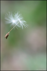 make a wish no.1 - by herbstkind