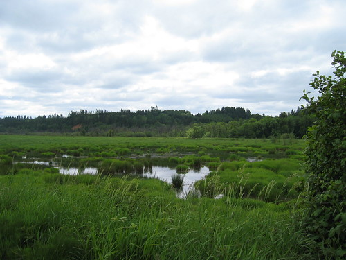 Wetlands, Cedar Canyon Rd, Banks, Oregon