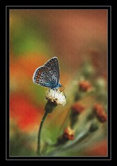 Butterfly (Giorgos~) Tags: macro butterfly searchthebest soe giorgos texturized flickrgold shieldofexcellence anawesomeshot superaplus aplusphoto goldenphotographer