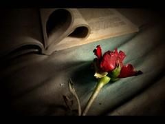 Love story (Atilla1000) Tags: love rose bravo heart explore story frame kalp interestingness6 magicdonkey outstandingshots abigfave fotorafkraathanesi superaplus aplusphoto bratanesque
