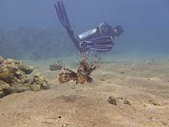 Kaz, Lionfish & Lunch (someofmypics) Tags: anthias linonfish divers hiltonfayrouz naamabay egypt