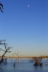 2016.11.17.05.54.14-Menindee Lake (www.davidmolloyphotography.com) Tags: newsouthwales kinchega kincheganationalpark menindee lake dawn moon