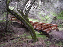Bridge (Blue Hills, California, United States) Photo
