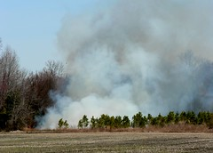 Brush Fire 1