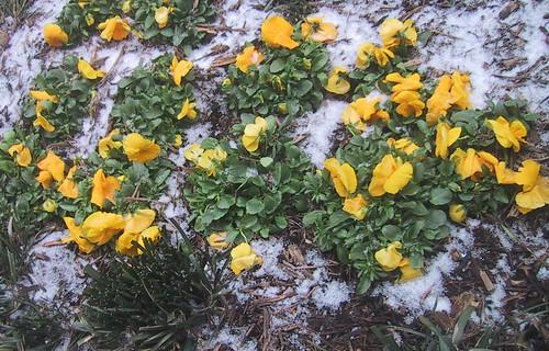 Not Quite Spring