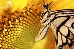 The call of nature (Abdullateef Al Marzouqi) Tags: diamondclassphotographer