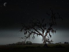 Tree at Night (Scott Kinmartin) Tags: moon tree night photoshop stars spanishmoss mossytree goldenphotographer 15challenges 15challengeswinner