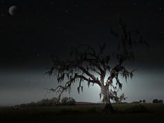 Tree at Night (Scott Kinmartin) Tags: moon tree night photoshop stars spanishmoss mossytree goldenphotographer 15challenges 15challengeswinner