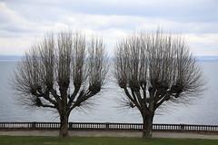 2-hairy-startled-arthritic-knuckle-trees (pete_pick) Tags: france tree abandoned water empty urbannature supershot urbannatureblog treesubject