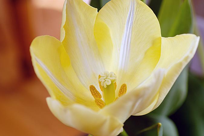 Flower top 2437