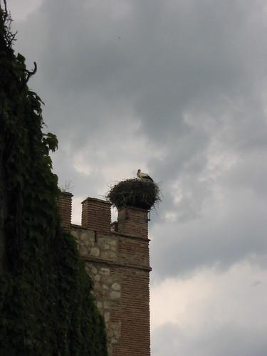 Una cigüeña en Alcalá de Henares