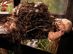 Bird's Nest - Mississippi Museum of Natural Science