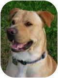 contact ramona billot  ramonabillot  at  yahoo com  to view animals in need