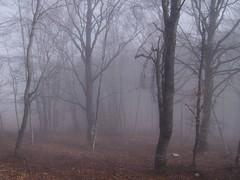 Castelluccio (anto_gal) Tags: natura nebbia albero umbria 2007 appennino bosco norcia castelluccio sibillini