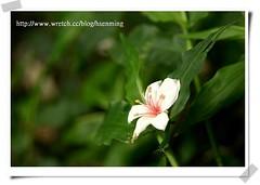 IMG_7260 (hsenming) Tags: sanyi